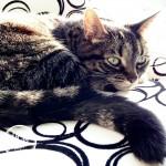 Brandy the healthy cat eyecandypopper